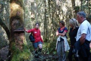 Milford-Track-with-Guide-Grace-on-Introductory-Nature-Trail-from-Glade-House-300x200