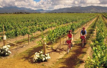 014g---Marlborough---Vineyard