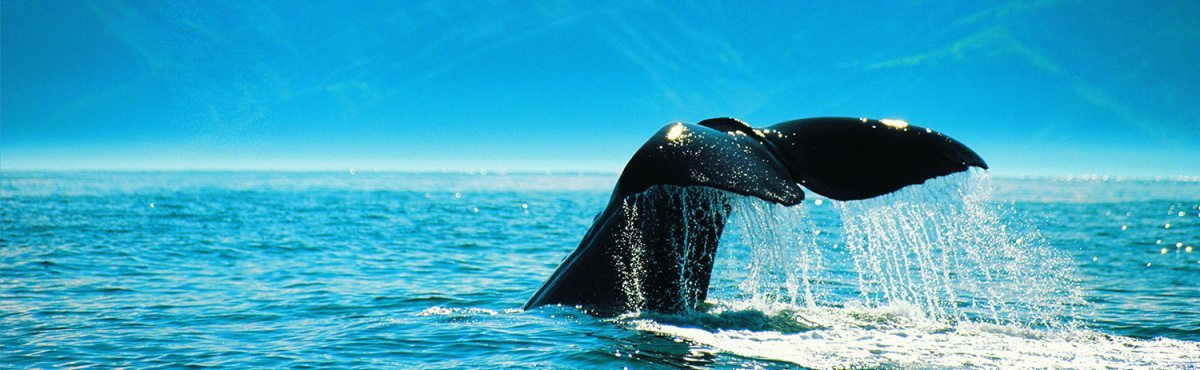 01Kaikoura--Whale-Tale