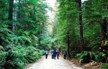 NA100-Redwood-Forest-Rotorua-Tourism-New-Zealand