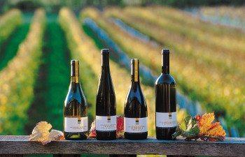 Neudorf-Winery-Nelson