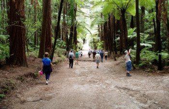Rotorua-Redwood-Forest-3