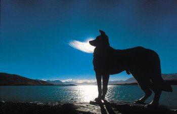 Sheepdog-statue-Lake-Tekapo