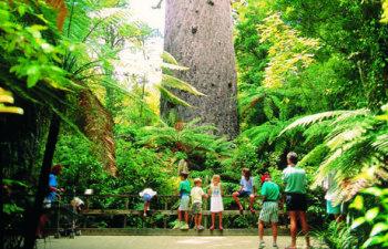 Tane-Mahuta-Kauri-Tree