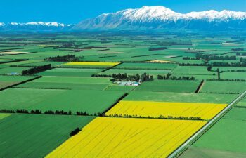 Canterbury-Plains-2