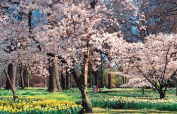 Hagley-Park-Christchurch