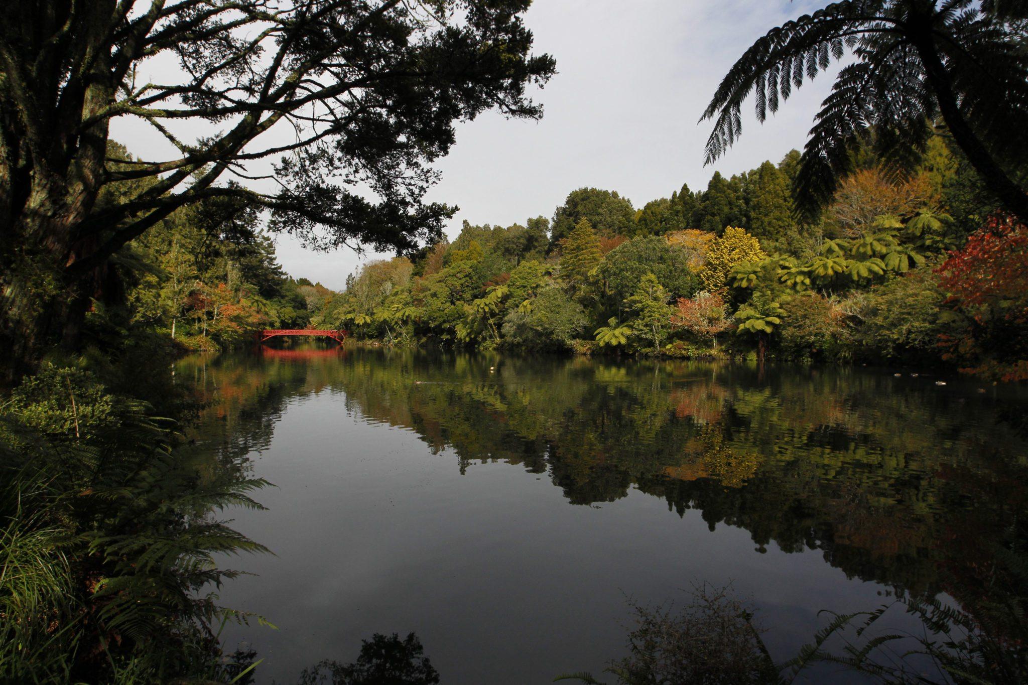 Pukekura autumn #5
